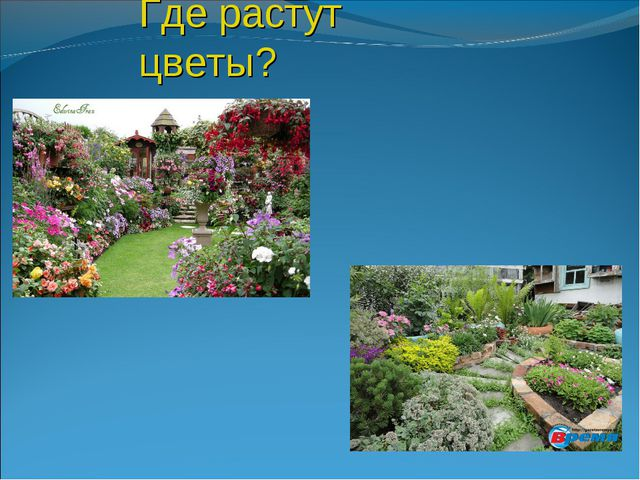 Где растут цветы?