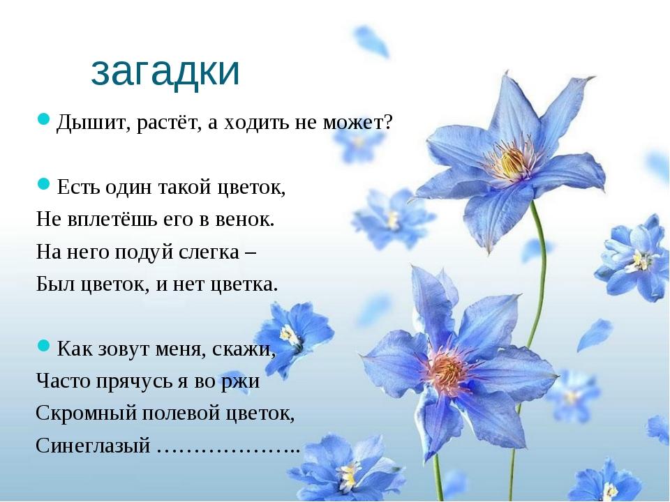 загадки Дышит, растёт, а ходить не может? Есть один такой цветок, Не вплетёшь...