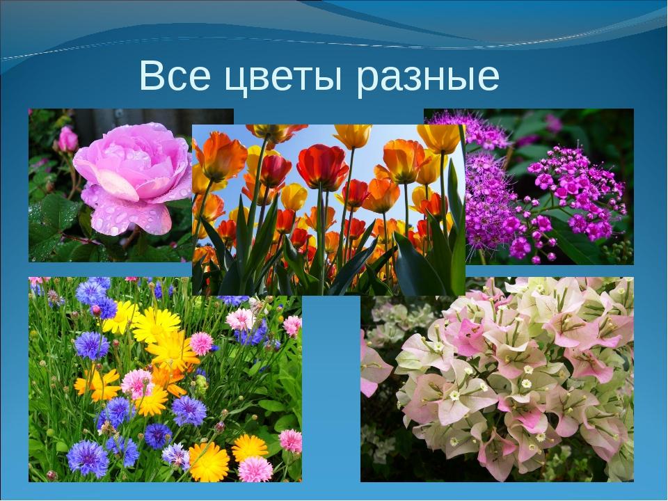 Все цветы разные