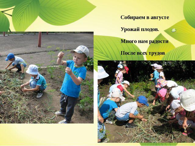 Собираем в августе Урожай плодов. Много нам радости После всех трудов
