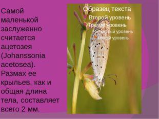 Самой маленькой заслуженно считается ацетозея (Johanssonia acetosea). Размах