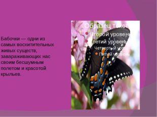 Бабочки — одни из самых восхитительных живых существ, завараживающих нас сво