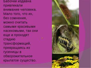 Бабочки издавна привлекали внимание человека. Мало того, что их, без сомнения