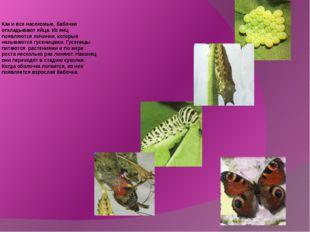 Как и все насекомые, бабочки откладывают яйца. Из яиц появляются личинки, кот