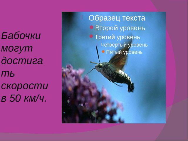 Бабочки могут достигать скорости в 50 км/ч.