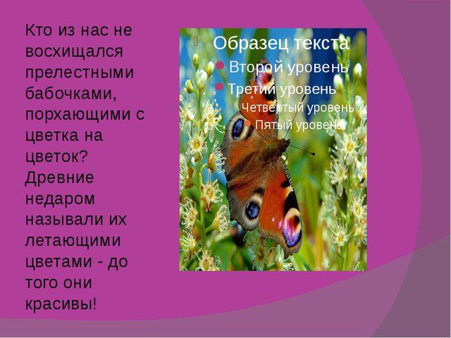 Кто из нас не восхищался прелестными бабочками, порхающими с цветка на цветок...