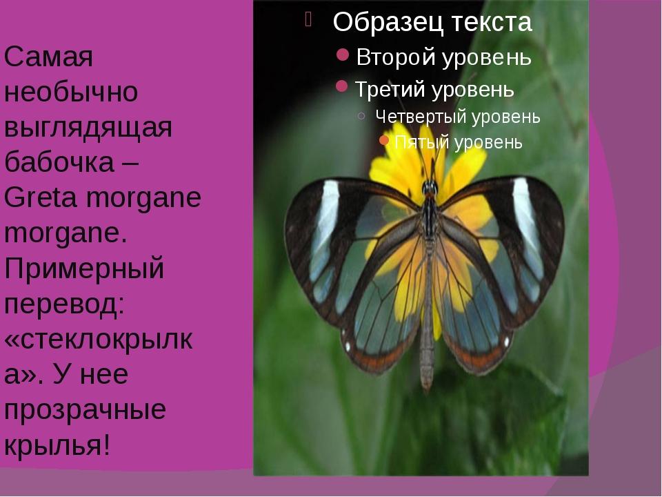 Самая необычно выглядящая бабочка – Greta morgane morgane. Примерный перевод:...