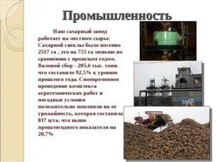 Наш сахарный завод работает на местном сырье. Сахарной свеклы было посеяно 2