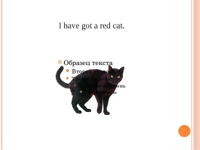 I have got a red cat.