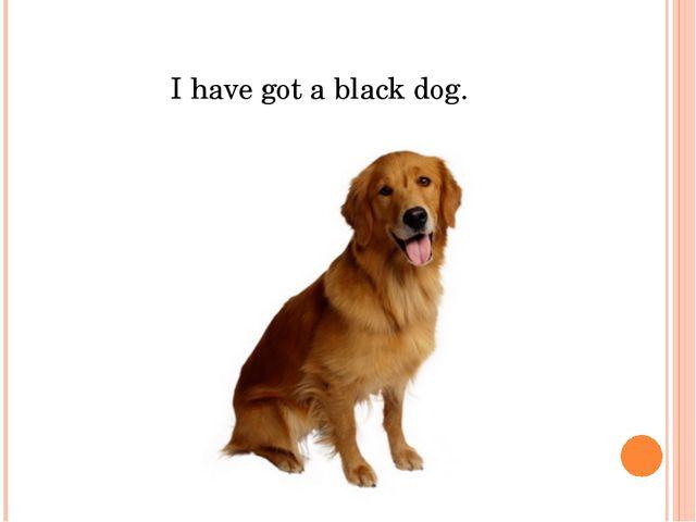 I have got a black dog.