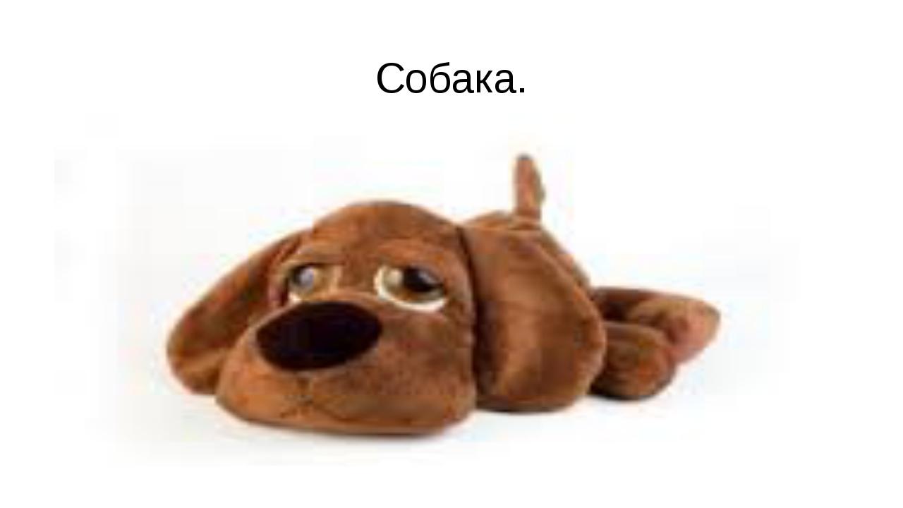 Собака.