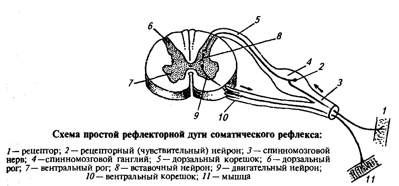 http://xreferat.ru/image/10/1304774221_3.png