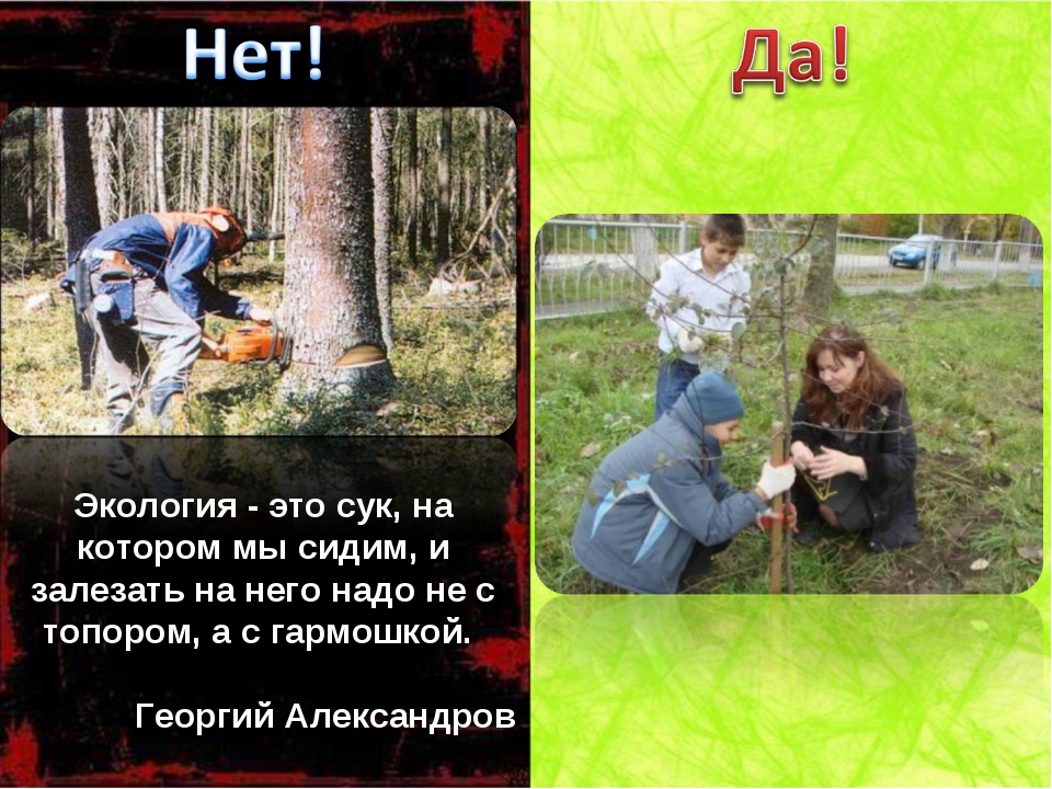 Экология - это сук, на котором мы сидим, и залезать на него надо не с топором...