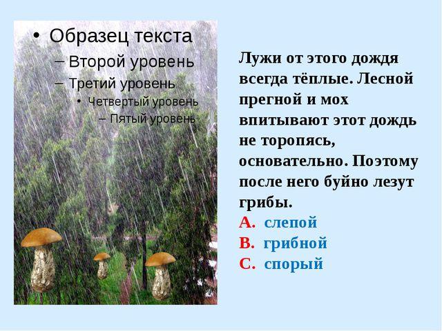 Лужи от этого дождя всегда тёплые. Лесной прегной и мох впитывают этот дождь...