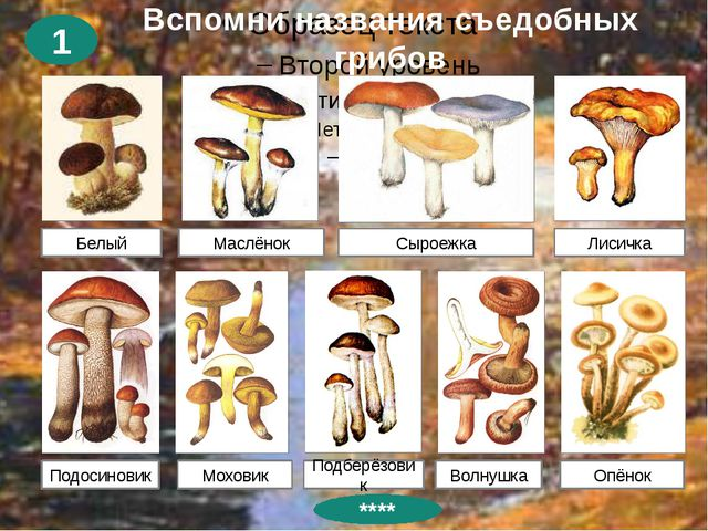 Вспомни названия съедобных грибов 1 Белый Маслёнок Сыроежка Лисичка Подосинов...