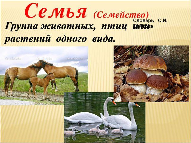 Семья (Семейство) Словарь С.И. Ожегова