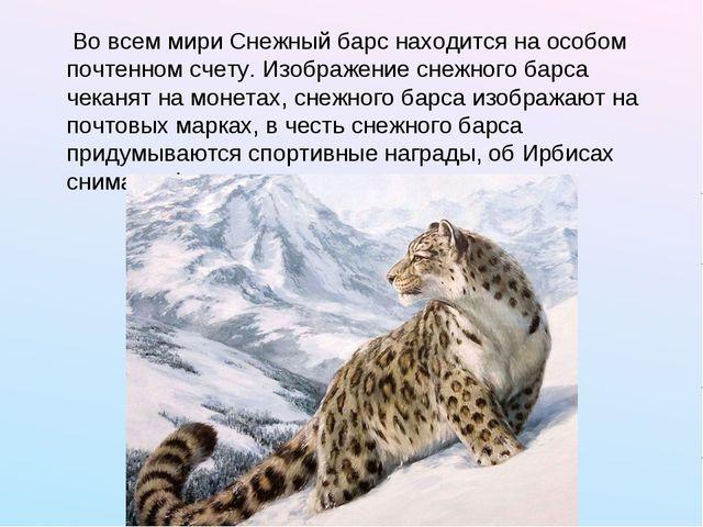 Во всем мири Снежный барс находится на особом почтенном счету. Изображение с...