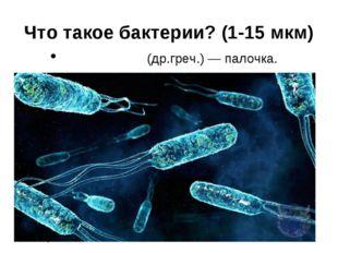 Что такое бактерии? (1-15 мкм) βακτήριον (др.греч.) — палочка.