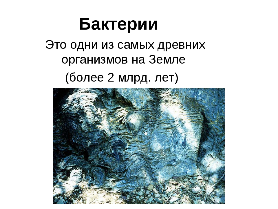 Бактерии Это одни из самых древних организмов на Земле (более 2 млрд. лет) Ца...