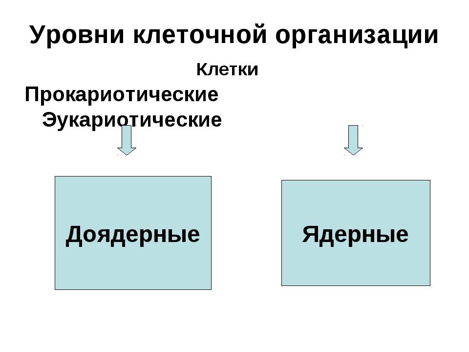 Уровни клеточной организации Прокариотические Эукариотические Доядерные Ядерн...