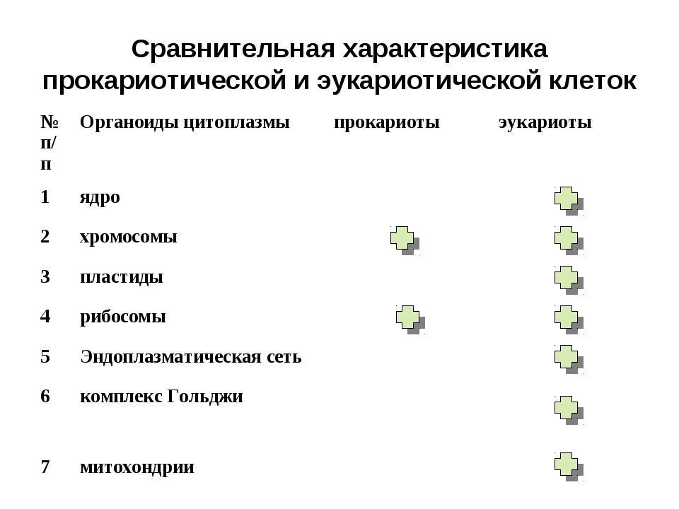 Сравнительная характеристика прокариотической и эукариотической клеток