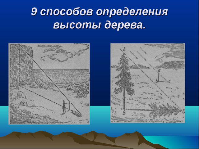 9 способов определения высоты дерева.