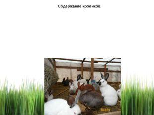 Содержание кроликов.