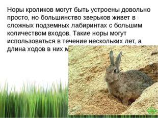 Норы кроликов могут быть устроены довольно просто, но большинство зверьков жи