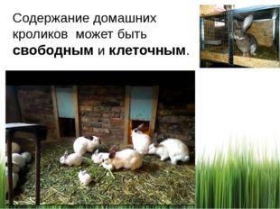 Содержание домашних кроликов может быть свободным и клеточным.