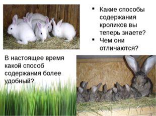 Какие способы содержания кроликов вы теперь знаете? Чем они отличаются? В нас