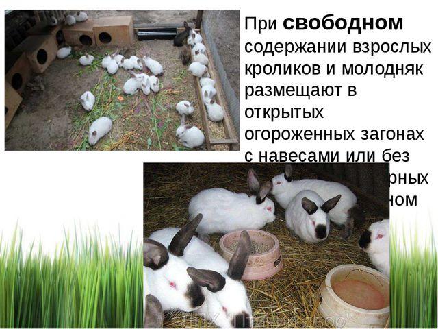 При свободном содержании взрослых кроликов и молодняк размещают в открытых ог...
