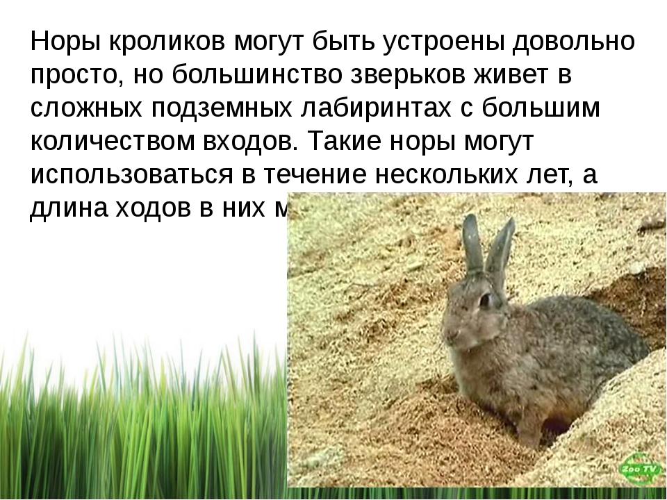 Норы кроликов могут быть устроены довольно просто, но большинство зверьков жи...