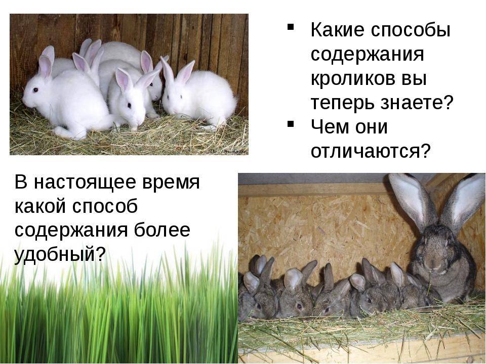 Какие способы содержания кроликов вы теперь знаете? Чем они отличаются? В нас...