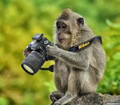 Картинки по запросу обезьяна смотрит