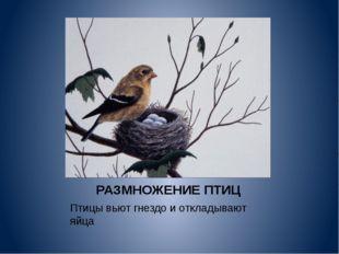 РАЗМНОЖЕНИЕ ПТИЦ Птицы вьют гнездо и откладывают яйца