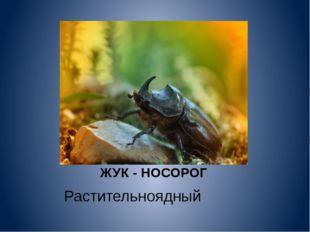 ЖУК - НОСОРОГ Растительноядный
