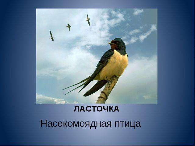 ЛАСТОЧКА Насекомоядная птица