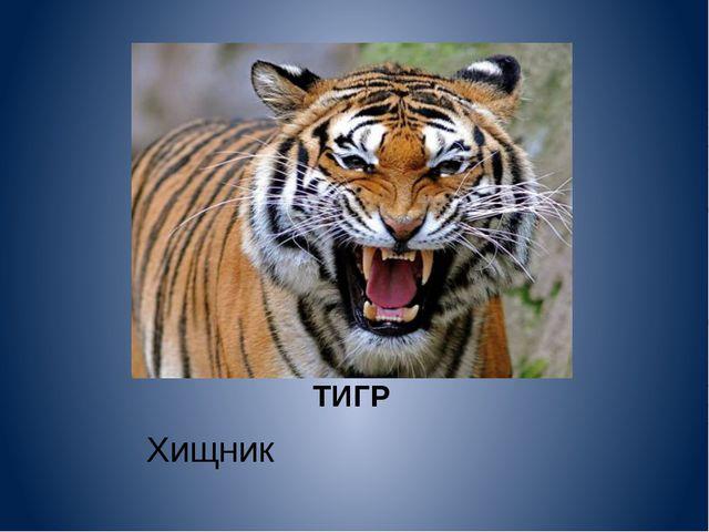 ТИГР Хищник