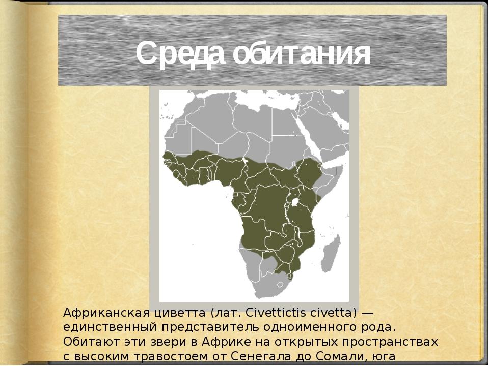 Африканская циветта (лат. Civettictis civetta) — единственный представитель о...