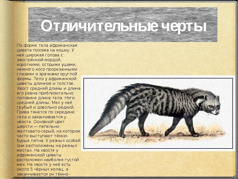 Отличительные черты По форме тела африканская цивета похожа на кошку. У неё ш...