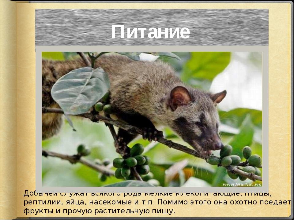Добычей служат всякого рода мелкие млекопитающие, птицы, рептилии, яйца, насе...