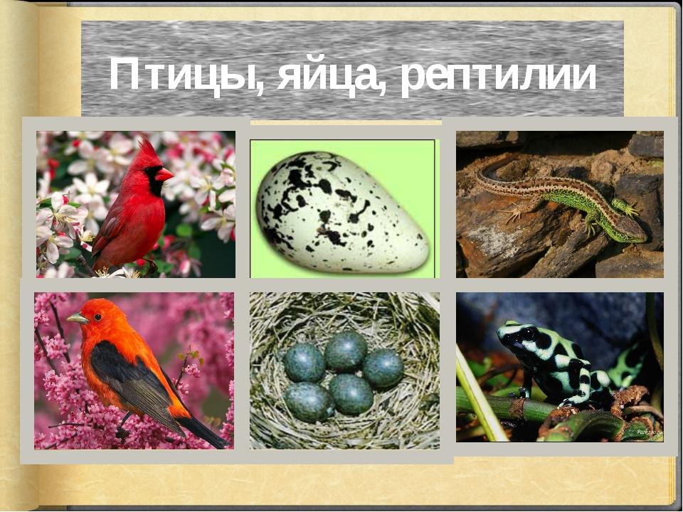 Птицы, яйца, рептилии