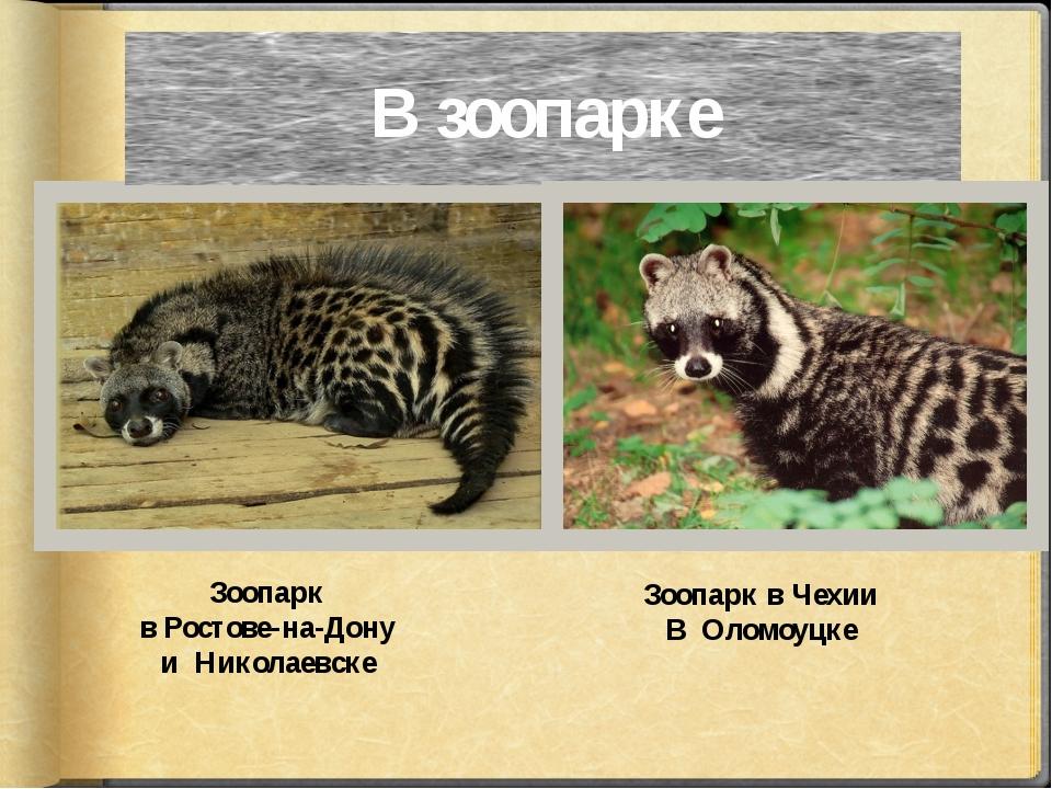 В зоопарке Зоопарк в Ростове-на-Дону и Николаевске Зоопарк в Чехии В Оломоуцке