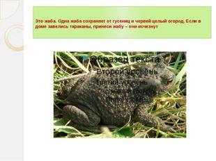 Это жаба. Одна жаба сохраняет от гусениц и червей целый огород. Если в доме