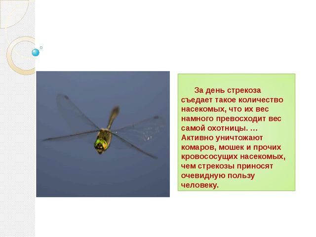За день стрекоза съедает такое количество насекомых, что их вес намного прев...