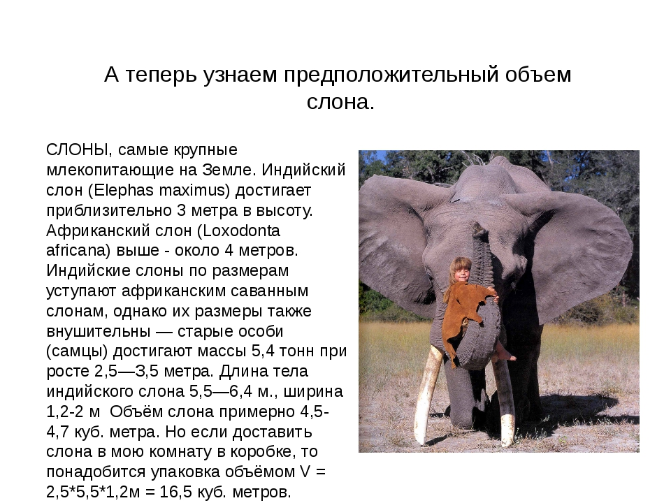 А теперь узнаем предположительный объем слона. СЛОНЫ, самые крупные млекопита...