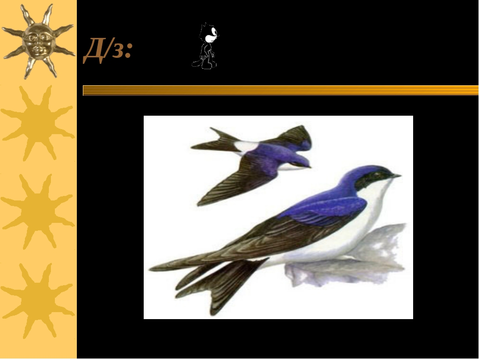Д/з: Узнай птицу. Составь о ней доклад.