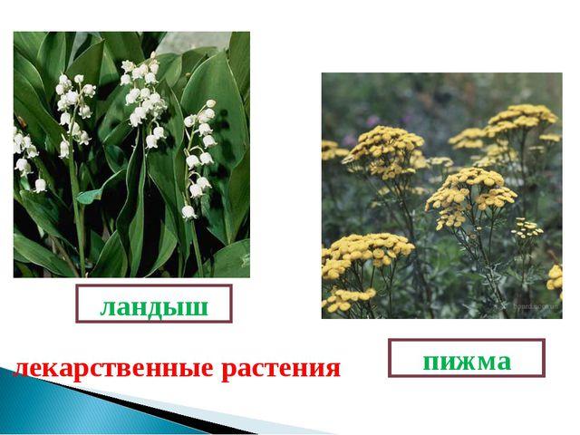 Есть растения такие, Они вовсе не простые. Если что-то заболит Эта травка исц...