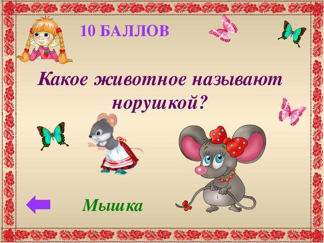 20 БАЛЛОВ Какое животное имеет рыжую, пушистую шубку и хвост? Лисица