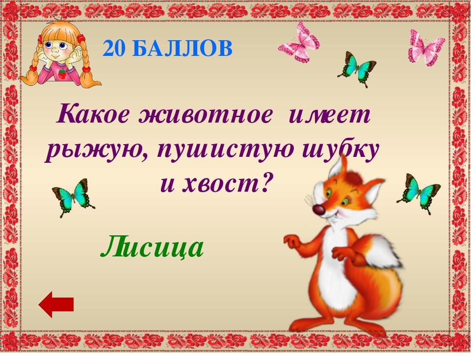 40 БАЛЛОВ Зайка О каком животном поётся в песне о ёлочке: «Трусишка …. серень...